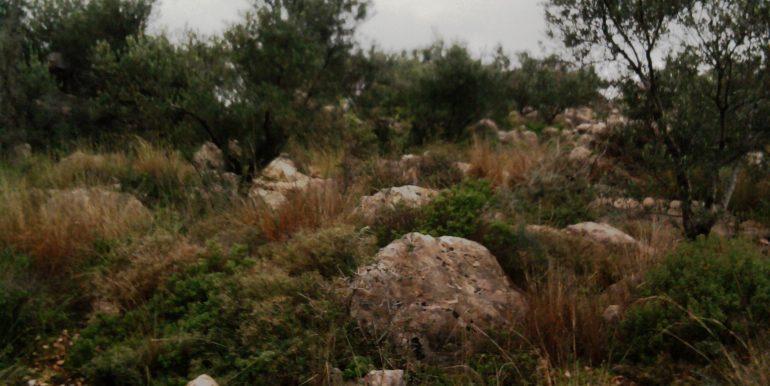 ΠΕΤΡΑΚΕΙΚΟ 5
